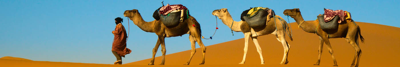 Three camels in the desert of UAE with the owner