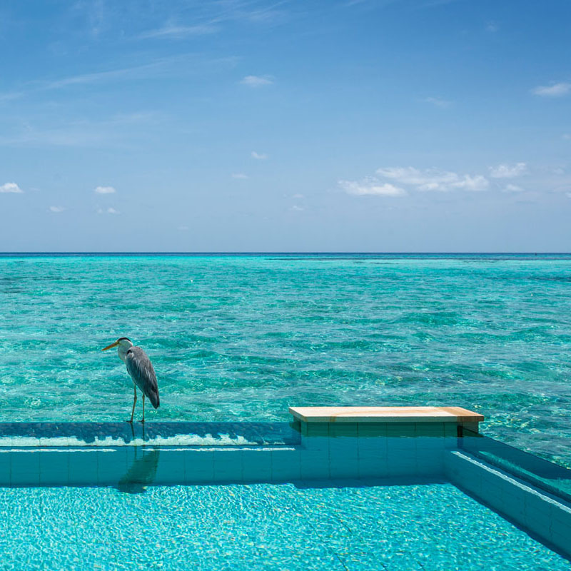 Four Seasons Resort Maldives at Kuda Huraa gallery images